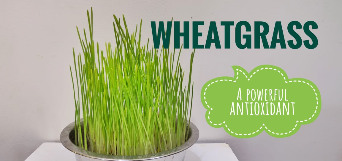 Why Wheatgrass is the Best Supplement for your Health?